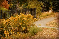 A Stroll Through Autumn (catmccray) Tags: fence fall autumn fencefriday path