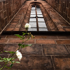 Gothic Rose, Kaiserslautern Germany (Les_Williams) Tags: stiftskirche germany kaiserslautern