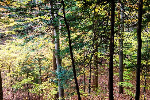 Shades State Park - Pine Hills Nature Preserve - October 30, 2016