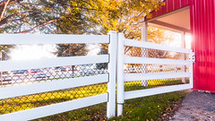 Gate Latched to Barn (Buckley Fence, LLC) Tags: gate ezlatch redbarn barn whitefencefarm chicagoland pettingzoo illinois fall steelfence wiremesh blackmesh buckleyfence steelboard whitefence goldenhour sunset