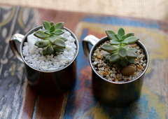 Terrrio Caneca (Mandacaru Terrrios) Tags: terrrios terrarios terrario caneca suculentas succulents cactos cactus