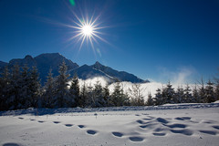 Gurnigel Langlaufpiste (Bugtris) Tags: gurnigel schnee nebel winter 2470f4l sonne landschaft tanne 5dmkiii berg canon gantrisch alpen langlauf