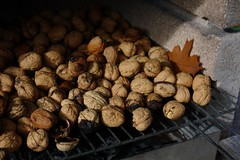 Walnuts (II) (dididumm) Tags: autumn fall autumnal harvesttime walnuts garden garten walnüsse ernte erntezeit herbstlich herbst