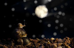If I could touch the Moon...// Si pudiera tocar la Luna... (Mireia B. L.) Tags: snail macro night starrynight nocheestrellada estrellas luna stars moon reachthemoon touchdemoon llegaralaluna tocarlaluna dreams bokeh sueos 7dwf