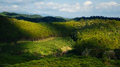 Coffee Farms (Huynh Ba Tung) Tags: coffee farms tea sky cloud highlands land landscape lamdong tree shadow highlight green yellow blue