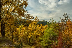 Tardor 2 (Toni Camacho) Tags: tardor autumn moianes lestany