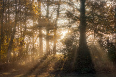 Burn Off (matrobinsonphoto) Tags: wood woodland forest tree trees sikhouette silhouetted trunk branches branch shadow ray rays light sun sunlight sunset golden hour nature natural mist fog glow orange beauty beautiful scene calm serene tranquil crepuscular york north yorkshire acaster malbis naburn