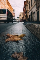 Dead leaves (mougrapher) Tags: ifttt 500px leaves leaf autumn fall street photography beautiful yellow light color beauty cars architecture strada architettura vsco wet building rome roma old italy italia