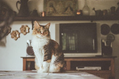 Menina (dvasconcellos27) Tags: exakta zeiss slr analog filmisnotdead filmisalive filmphotography kodak colorplus capucho riodejaneiro brasil brazil cat catportrait pet animal