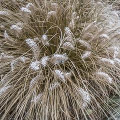 Erster Frost - 0008_Web (berni.radke) Tags: ersterfrost frost raureif wassertropfen rime eisblumen eiskristalle iceflowers icecrystals escarcha
