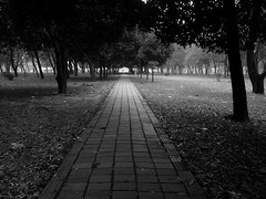 The Lone Path (ainulislam) Tags: path pattern pathway blackandwhite black white line tree lone lonely emotion vsco colours colourbalance retro bw bnw dhaka dhakagram dhakagraam bangladesh