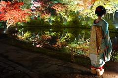 Maiko20161119_06_03 (kyoto flower) Tags: kodaiji temple fukuno kyoto maiko 20161119      noblesseoblige
