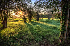 Sun Kissed Meadow (adamkylejackson) Tags: sunrise sunstar meadow grassland forest hiking trails houston texasd nature trees