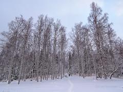 National Park Koli - Finland (Sami Niemelinen (instagram: santtujns)) Tags: koli suomi finland kansallispuisto national park mets forest talvi winter lumi snow puu tree patikka retkeily hiking trekking luonto nature maisema landscape pohjois karjala north carelia lieksa