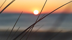 All I know (Nob') Tags: n0b photo france sunset bokeh bokehandbeyond macro winter late sun beach seasie dof waves red love radiation travel inspiring journey cotentin french depth lightroom dmcfz45 field work landc arena sable sand wind shore