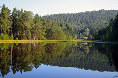 Reflet sur l'tang-tourbire du Welschkobert Bas (Croc'odile67) Tags: nature forest nikon reflet reflexion tang eaux forets d3200 vosgesdunord afsdx18105