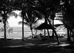 Coconut Coast (Lig Ynnek) Tags: 120 film beach coast palm