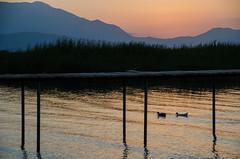 Evens (Melissa Maples) Tags: summer lake black mountains water animals silhouette turkey evening pier nikon asia dusk trkiye ducks nikkor vr afs  18200mm  f3556g atapark  beyehir 18200mmf3556g d5100