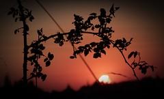 Villers-Campeau sunset 3 (april-mo) Tags: sunset sun contrejour coucherdesoleil todayssunset darkpicture villerscampeau