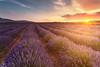 Lavender fields (Antonio Carrillo (Ancalop)) Tags: sunset españa field canon atardecer spain soft lavender murcia 09 1740mm lavanda gradual canon1740mmf4l gnd moratalla neutraldensity densidadneutra antoniocarrillo 5dmarkii ancalop lucroit leesoft09gnd wwwantoniocarrillocom