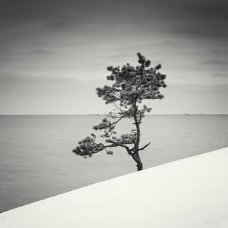 Standing on the Seashore