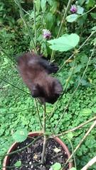 Clicquot acrobata corto #gatto #gattonero #tenerogatto #gatti #cat #blackcat #lovecat #chat #tenderly #natgeo #versiliatoday #tuscanygram #igertoscana #gato #pet #cucciolo #gattino #smile (stefola24) Tags: pet smile cat blackcat chat gato gatto gatti cucciolo gattino tenderly natgeo lovecat gattonero tenerogatto tuscanygram igertoscana versiliatoday
