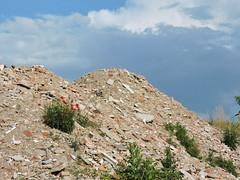 Anche dalle macerie pu crescere qualcosa di buono. (]alice[) Tags: broken clouds nuvole debris pietre poppy nuages sassi rubble escombros papaveri gravats macerie cumulo dcombres