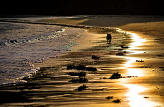 sunset strole (Mallybee) Tags: mallybee sunset sea dog fujifilm xt10 90mm sun fujinon beach