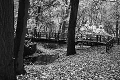 Bridge in the Leaves (MTSOfan) Tags: park bridge stream greyscale