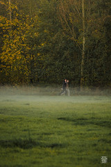 2015-11-01_Q8B4041  Sylvain Collet.jpg (sylvain.collet) Tags: autumn france nature automne sur marne vairessurmarne vaires