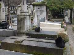 Cats (4) on Tombstones in Cimetière de Montmartre (carolemason) Tags: cats paris tombstones cimetièredemontmartre