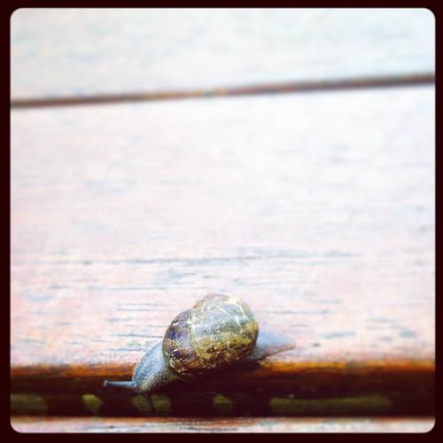 313/365 • exploring the deck • #313_2015 #snail #goodmorning #Spring2015