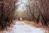 South Dakota Luxury Pheasant Hunt - Gettysburg 63
