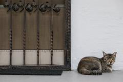 151229 - Door (y_leong23) Tags: cat dlux