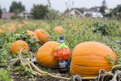 Yes, we can still see you Ghostie (Adnams) Tags: hauntinglygood ghostship beer wangford suffolk adnams halloween costumes pumpkins pumpkin wangfordfarmshop