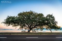 De Los Santos (_ R i c a  d O _) Tags: 2014 amanhecer brasil brazil brsil floripa ilha ricardophilippide los santos sunrise sol soleil sun sunset