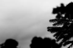 Autmn Vibes (Magnus - Mern) Tags: autmn nature tree green grass wetgrass wet overvast overcast greengrass denmark danish danishnature skagen nordjyland mern detmern