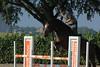 IMG_4905 (Bas & Emily) Tags: horse horses horsejumping jump jumping rijden paard paarden springen springwedstrijd sport belleepoque hindernis