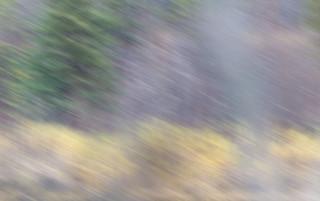 Pastel Wetlands