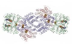 Nitrogenase Complex (Pacific Northwest National Laboratory - PNNL) Tags: pnnl pacificnorthwestnationallaboratory doe departmentofenergy