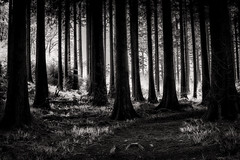 The dark wood (Sharpe Shooter - paulbnashphotography.com) Tags: cornwall england wood dark apprehensive scary alone pine tree trees woods forest black white light sunlight