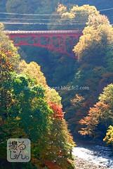 161102t (finalistJPN) Tags: autumn colors leaves daylight redbridge valley sunshine presentingpicturesandphotos ppap discoverjapan nationalgeographic japaguide discoverychannel traveljapan visitjapan stockphotos autumnday