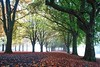 The Prom (Paul C Stokes) Tags: clifton parade bristol uk autumn leaves brown avenue trees carpetofleaves sony sonya7r a7r zeiss zeiss1635 1635 fog foggy mist misty morning conditions light green filterd plant tree outdoor promenade