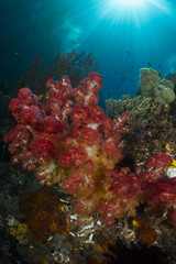 DSC_2366 (Mgungen) Tags: underwater underwaterphotography colourful nikon d7100 subal tokina 1017 inon z240 indonesia rajaampat diving scuba wideangle ocean sea blue reef coral misoolecoresort batbitim