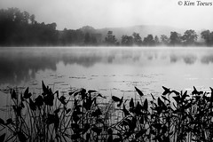 In the Autumn Morning Fog - Renfrew County, Ontario (Kim Toews Photography) Tags: outdoor water fog bonnechereriver ontario landscape monochrome blackandwhite bw mist plants hills trees reflections renfrewcounty