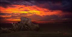 Atardecer rojo n4 (bit ramone) Tags: atardecer sunset rojo red playa beach bitramone madera tronco rbol sky