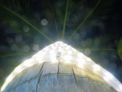 1 Looks Up at Palms (Mertonian) Tags: mertonian abstract lookingup tree palm green dark light gratitude awe creative canon powershot g7x mark ii canonpowershotg7xmarkii whitelight cordlight night robertcowlishaw ropelights reflections palmtree wisdom