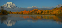 Oxbow's Glory (cagleswanderlust) Tags: oxbowbend snakeriver mountmoran grandteton grandtetonnationalpark grandtetons mountains water yellow fall autumn nature landscape wyoming nationalpark snow fog reflections aspens golden deannacagle outdoor serene wow cloudsstormssunsetssunrises