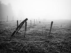 Angle de clture. (steph20_2) Tags: panasonic gh3 m43 20mm lumix monochrome monochrom clture campagne countryside picardie automne autumn brouillard pr noir noiretblanc ngc blanc black bw white skanchelli paysage