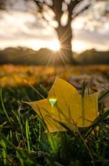 Autumn Leaves // Hamburg (//Sebastian) Tags: autumn fall leave yellow green sun sunset tree dop lenseflare colors colorful park grass stadtpark hamburg germany star stars barmbek winterhude outdoor blurr calm evening